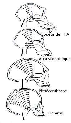 cerveau fifa
